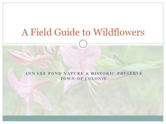 a-field-guide-to-wildflowers-at-ann-lee-pond-cover